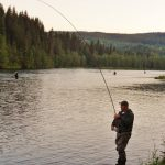 One of several fishermen standing in the river fishing salmon in the river Røssåga with a fish on the hook.