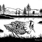 """A black-and-white drawing of the bird, """"Brushane"""", walking in front of the lake, Stormyrbassenget."""