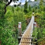 "Bridge surrounded by green and lively nature, on the path to go to the big and majestic pine tree, ""Storfurua""."