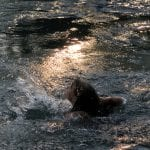 A happy girl taking a refreshing bath in the cold river water that is shining from the sun.