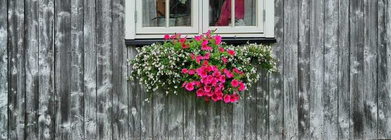A white window with pink and white flowers underneath on a beautiful grey wood building at Inderdalen Farm.